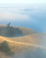 Rolling fog on Mount Tam