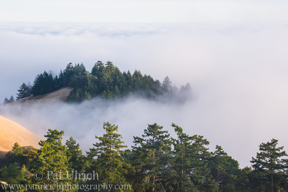 A tree-covered hilltop peeks out from the coastal fog in Mount Tamalpais State Park, California