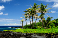 Palm trees at Black Sand Beach, Maui, Hawaii