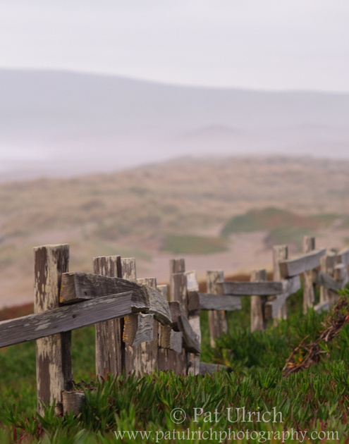 Old fence along the dunes at North Beach in Point Reyes National Seashore