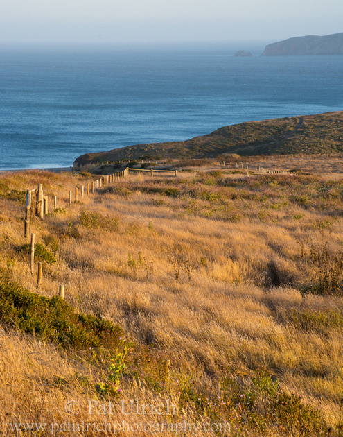 Landscape photograph of coastal pastures overlooking the blue Pacific Ocean in California
