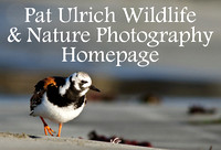 Pat Ulrich Wildlife and Nature Photography Homepage