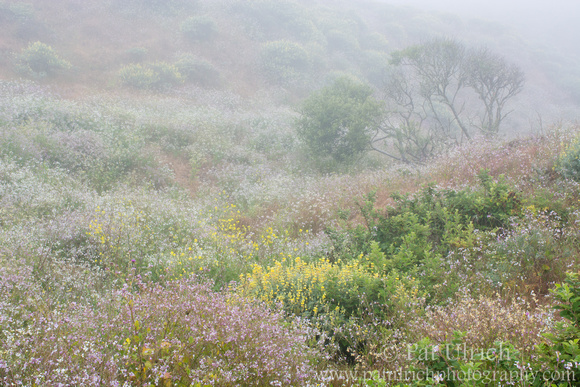 Photograph of a wildflower filled valley in Point Reyes National Seashore